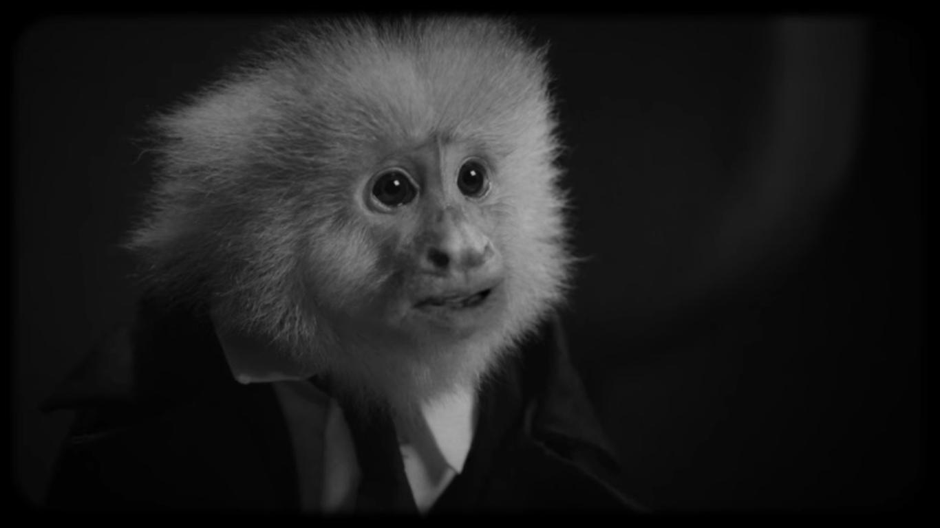 Дэвид Линч в своем новом фильме допрашивает обезьяну и задает ей самый главный вопрос